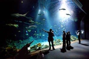 Großes Hai-Atoll